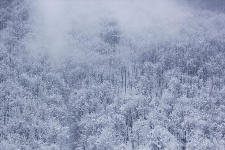 Download this free photo here www.picmelon.com #freestockphoto #freephoto #freebie /// Fog over Snowy Forest | picmelon