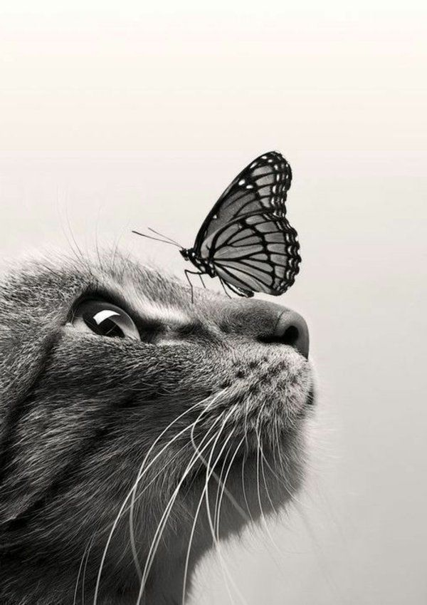 Chat avec papillon sur le nez - Cat with butterfly on nose