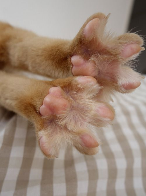 """cat  A friend of mine calles these """"starfish toes."""""""