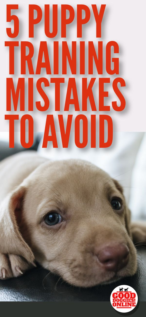 Puppy Training Mistakes That You Should Avoid Good Doggies
