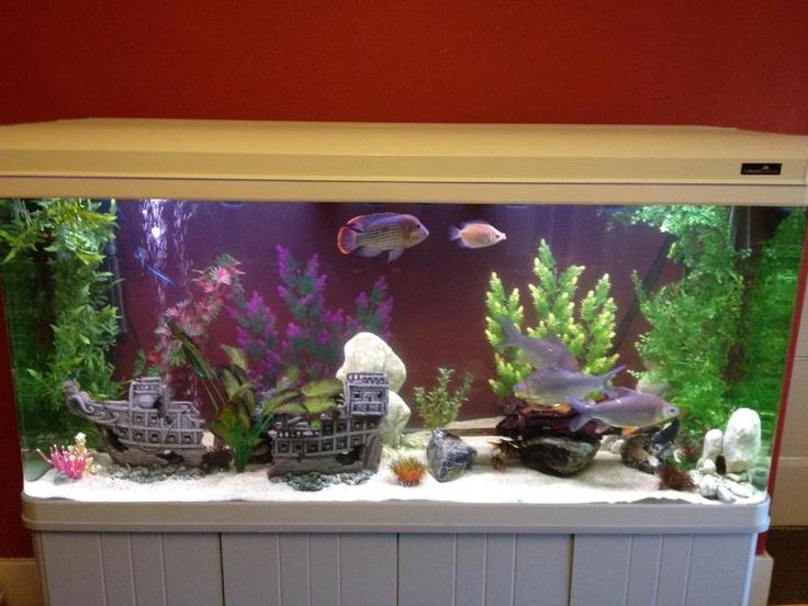 20 best under stairs toilet images on pinterest bathroom for Aquarium boule 20 litres