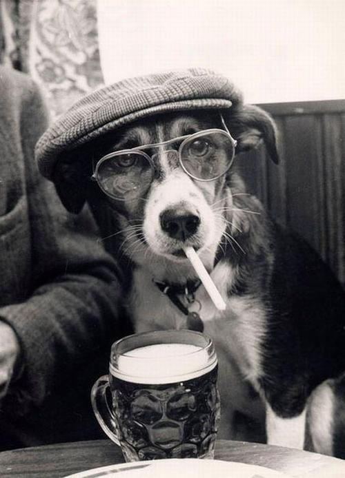 hipster dog smokes american spirits