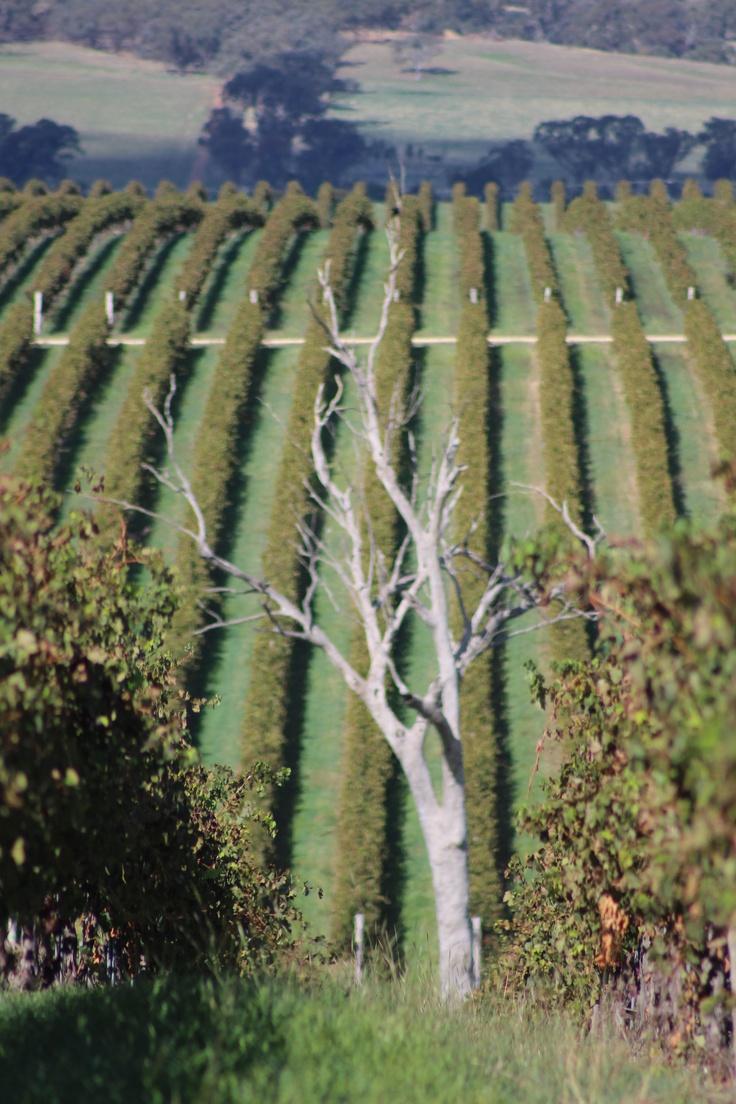 Cumulus Vineyards in Orange, NSW