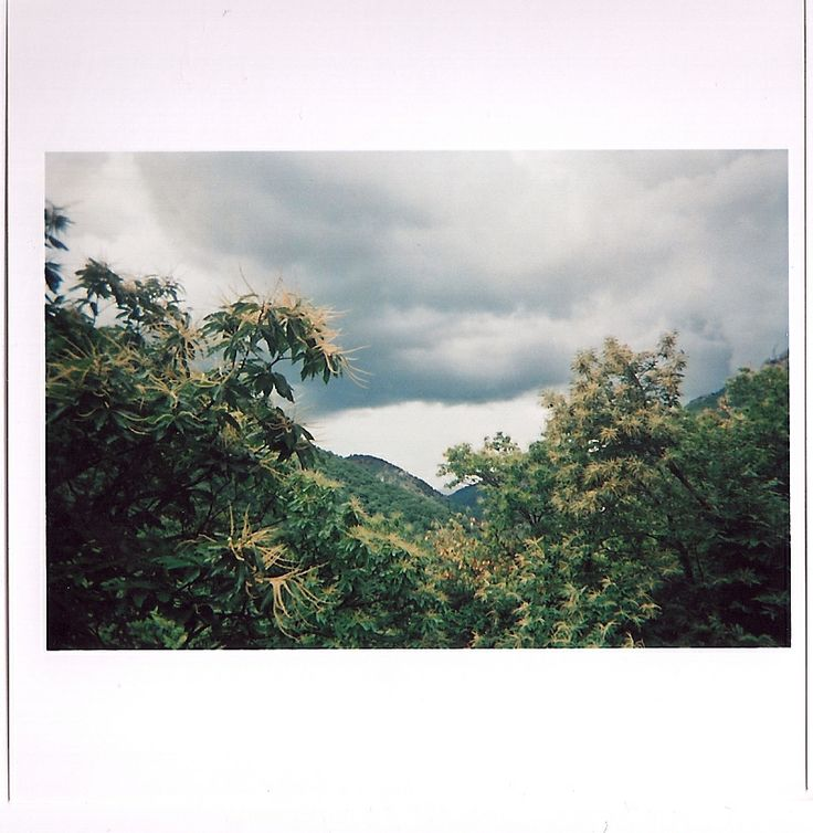 snake skin . jacket     #tropical #sky #clouds #view #storm #france #analogue #lomo