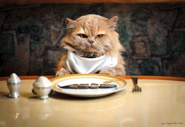Dinner time ...