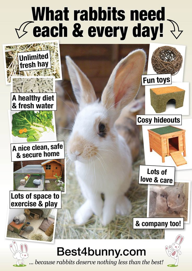 What rabbits need each & every day! www.best4bunny.com