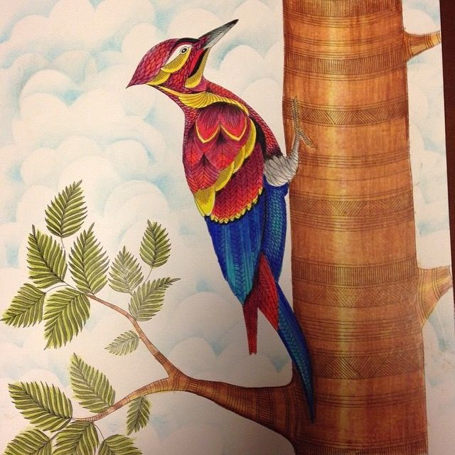 Coloring Books Colouring Owl Bird Animal Kingdom Tropical Wonderland Pencil Reino
