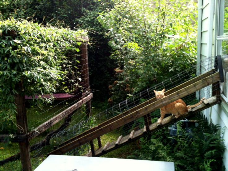How To Create A Safe Outdoor Cat Enclosure Or Catio For Your Kitty   Page 4  Of 4   Get Catnip Daily
