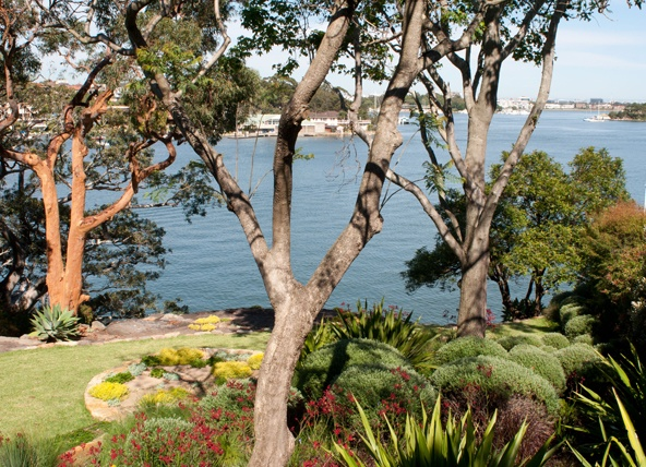 Low sandstone walls provide raised beds for mass plantings of clipped Coastal Rosemary (Westringia fruticosa), Kangaroo Paws (Anogozanthus flavidus) and clumps of Gymea Lilies (Doryanthes excelsa).