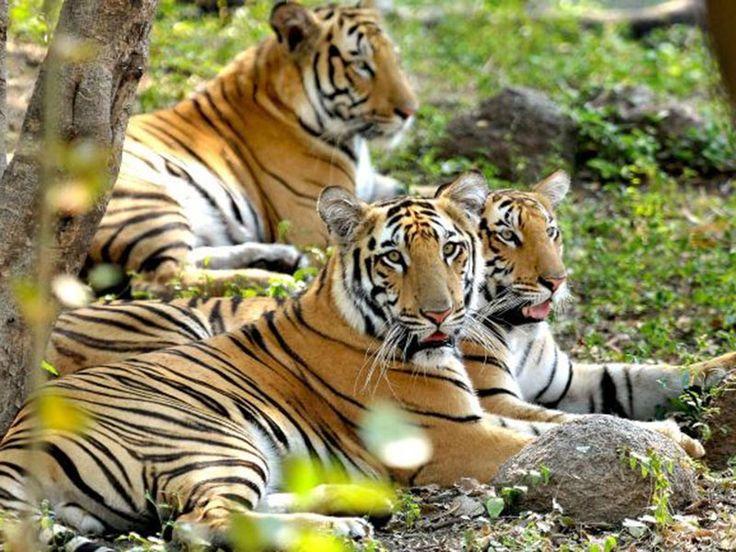 Nehru Zoological Park - in Hyderabad, Telangana, India