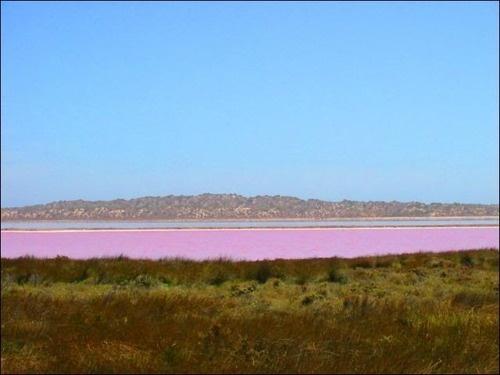 Pink lake Esperance WA