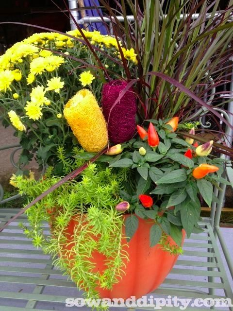 Get inspired for fall foliage with these fourteen autumn planters shared by Sow & Dipity. Add some birch branches and colorful moss to your planter to give it that fall look.