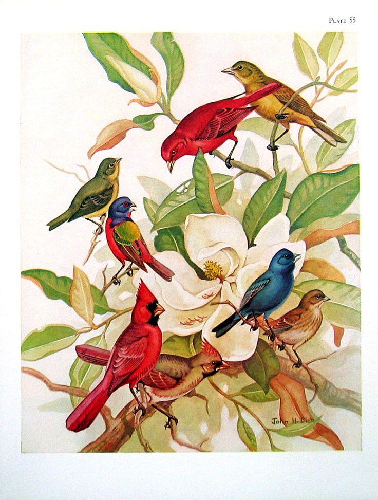 Bird Print Summer Tanager Painted Buntings Indigo