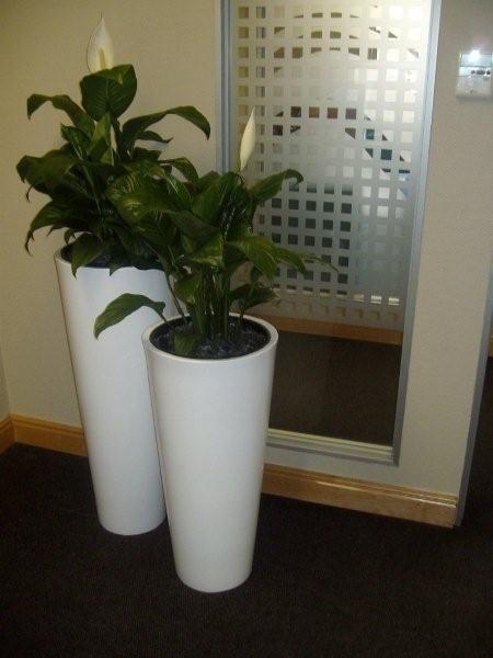 Big Indoor Floor Plants For Conference Room