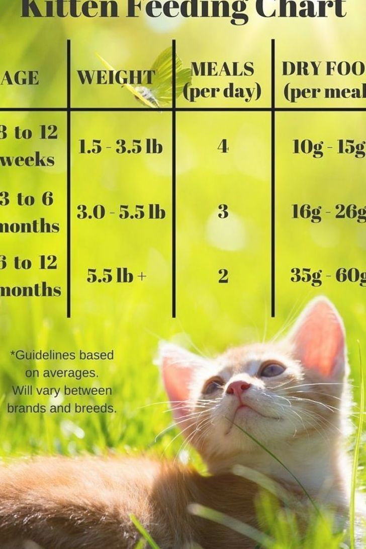 Kitten Feeding Chart For Kittens On A Dry Food Schedule Quantities Of Kitten Food Or Kibble To Feed At Different Ages Kitten Food Cat Care Tips Kitten