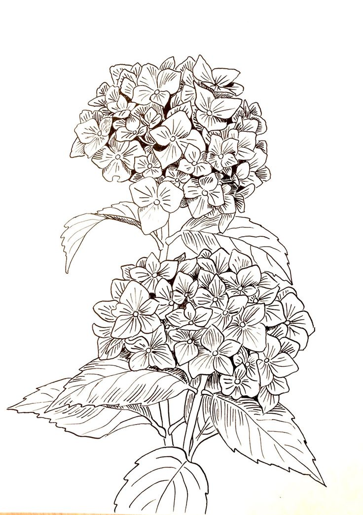 19 best images about Rysunki tuszem on Pinterest | Roses