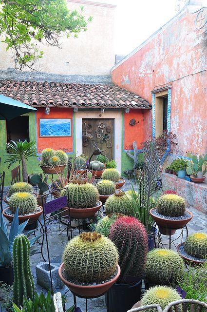 Cactus on pedestals.