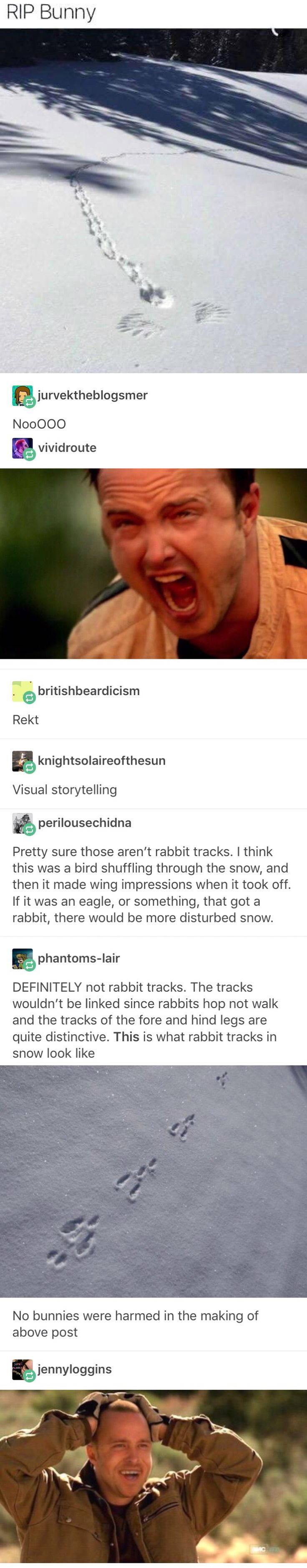 Yeah, I was shaking my head at the original picture. Those were definitely bird tracks. Probably looking for food in the snow, then flew off to keep searching.