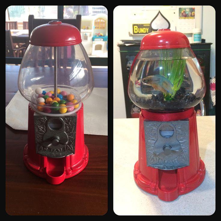 Gum ball machine turned fish tank