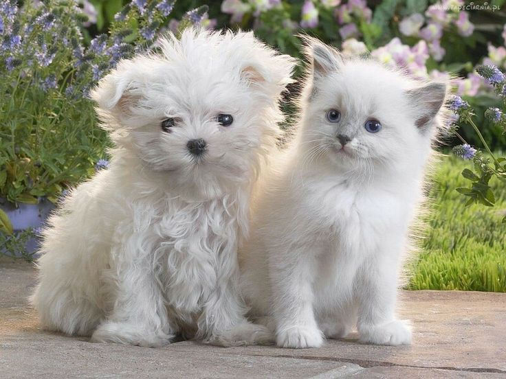 I LOVE dogs! The best friend forever!