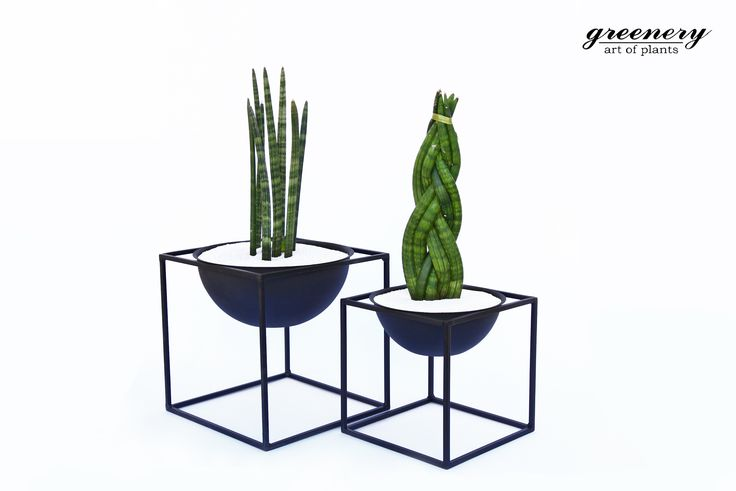 Beautiful plants need beautiful pots! #greenery #pots #planters #airplants #succulents #cactus #plants #chania #greece