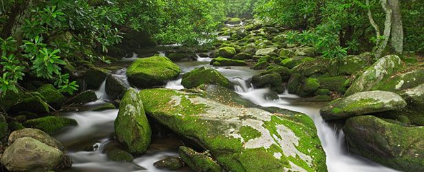 Picture of the Great Smokey Mountains National Park