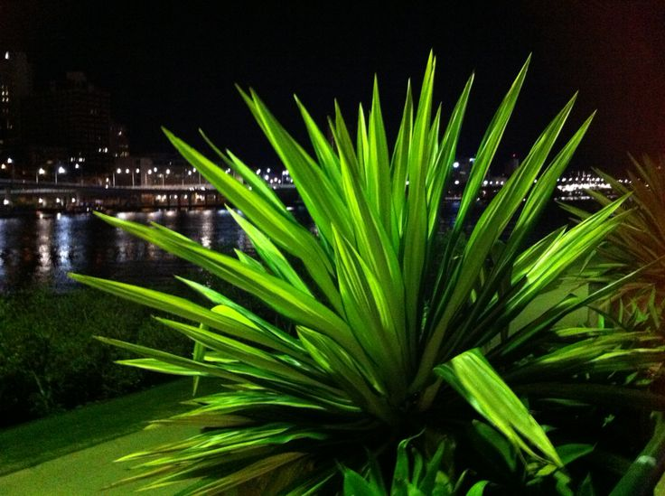 Stunning creatures of spikey madness at Southbank