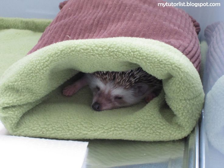 Fleece Pouch Tutorial For Hedgehog, Hamster, Guinea Pig, Ferret, Sugar Glider, and Other Small Animals : Behind Mytutorlist.com
