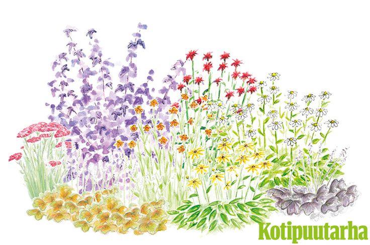 MAUSTEISIA VÄREJÄ PUUTARHAAN. Jatka puutarhakautta istutuksella, joka kukkii vielä syyskuussa. Mausteiset värit ennakoivat ruska-aikaa. Istutuksen kasvit: Punakärsämö (Achillea millefolium), sädepäivänhattu (Rudbeckia fulgida var. sullivantii), valkoinen kaunopunahattu (Echinacea purpurea), tarhakeijunkukka (Heuchera Brizoides-Ryhmä), punaväriminttu (Monarda didyma), purppuraheisiangervo (Physocarpus opulifolius), syyshohdekukka (Helenium autumnale).