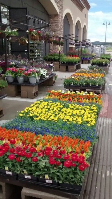 Front tables at Lowes garden. RP