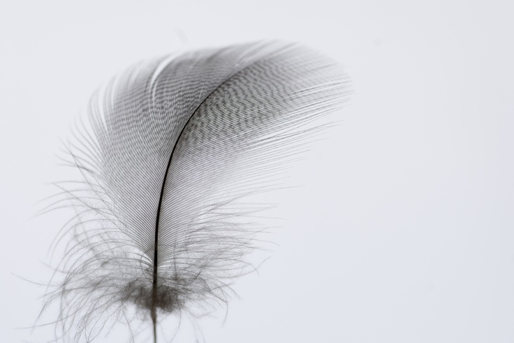 Feather photography