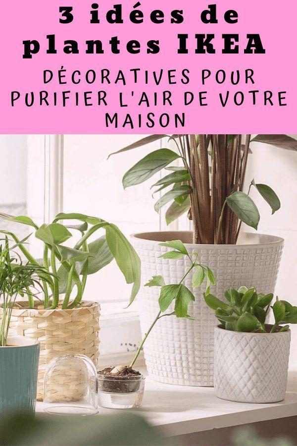 3 Idees De Plantes Decoratives Ikea Pour Purifier L Air De La
