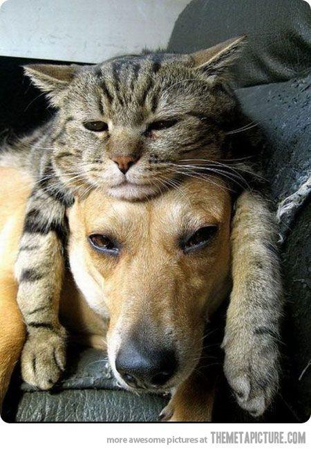 【犬<猫】どうしてもネコに勝てない犬の画像23選 - ペット日和