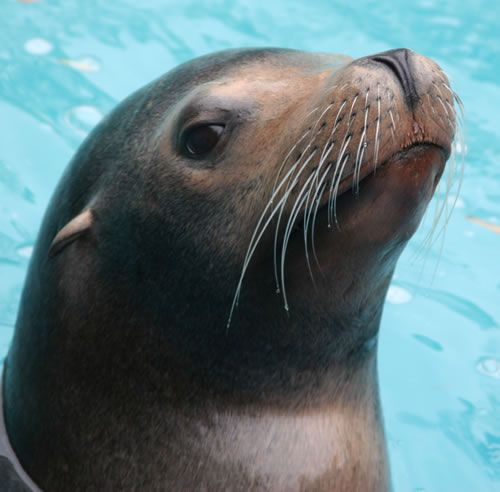 Slowly working my way to sea lion trainer at the Memphis zoo.   You might think I am kidding, but I am quite for real!