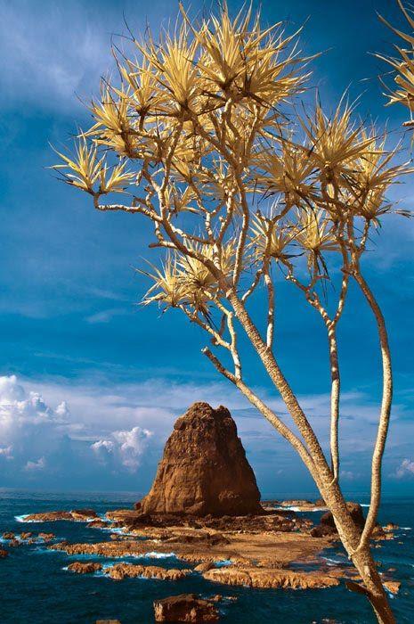 Papuma beach, Indonesia