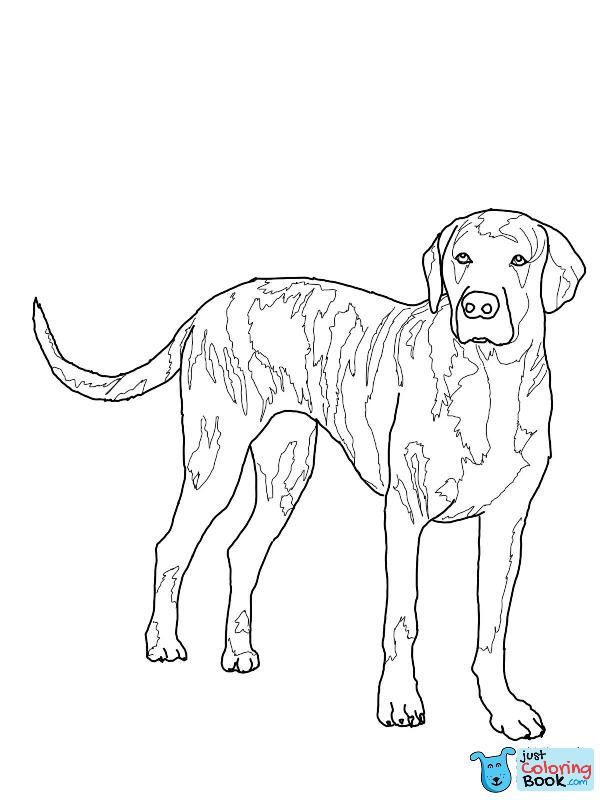 Plott Hound Outline Plott Hound Beagle Colors Dog Coloring Page