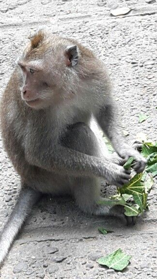 I love Monkey Forest Ubud