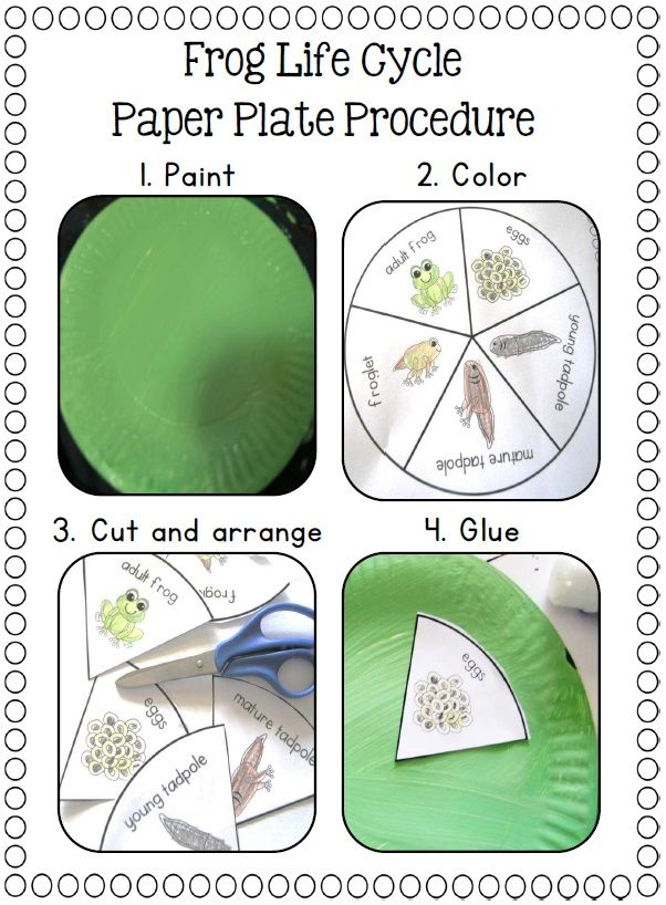 Frog life cycle poster and simple craft.$ http://www.teacherspayteachers.com/Product/Paper-Plate-Life-Cycles-Frog-Pumpkin-Apple-Sunflower-and-more-877497