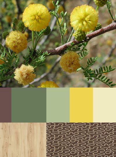 Acacia, cute furry yellow balls ...