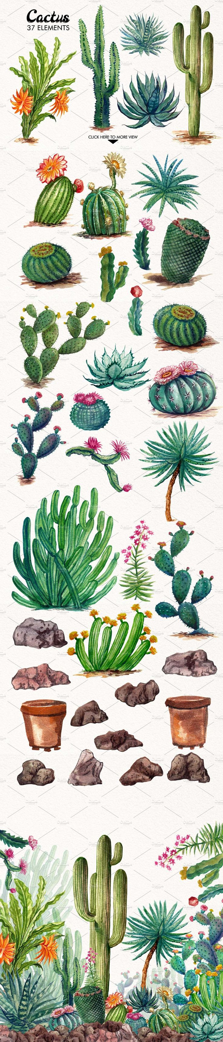 Watercolor Cactuses by iGRAPHOBIA on @creativemarket