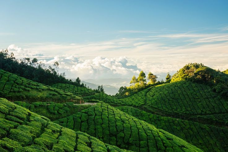 79. Take in the views from the Kolukkumalai Tea Estate — a sprawling piece of land that sits at 8,000 feet above sea level — in Munnar, India.