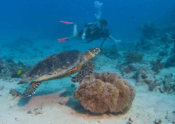 There is nothing like swimming with the turtles on the Great Barrier Reef