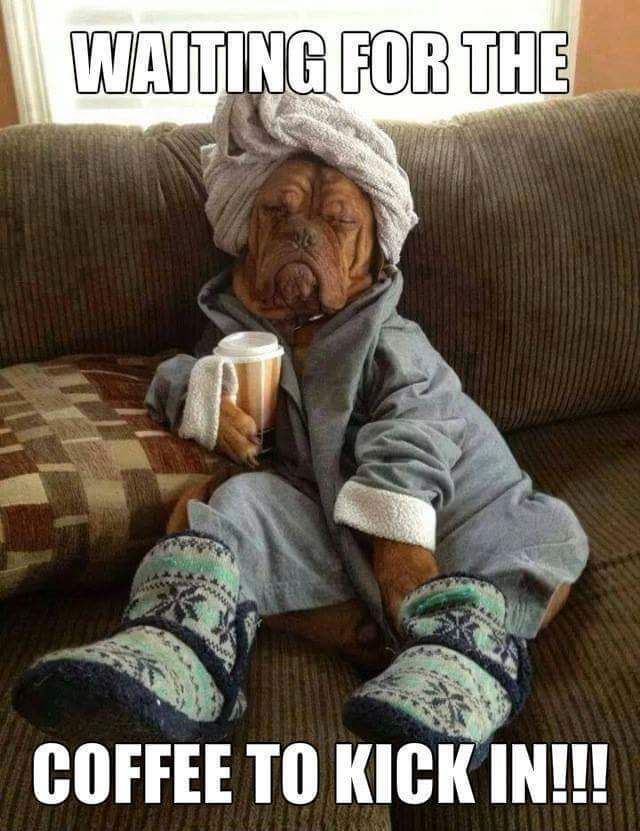 Coffee Lover In 2021 Funny Animal Memes Funny Pictures Good Morning Funny