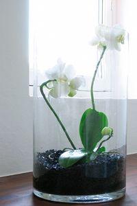Orkidé i glasvase
