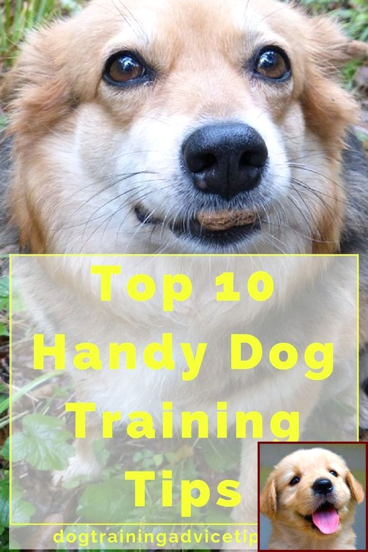 1 Have Dog Behavior Problems Learn About Potty Training Puppy
