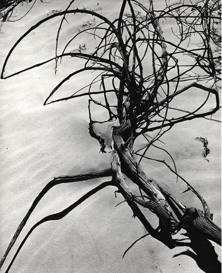 Sand and Tree Branches White Sands, New Mexico, 1975  Brett Weston