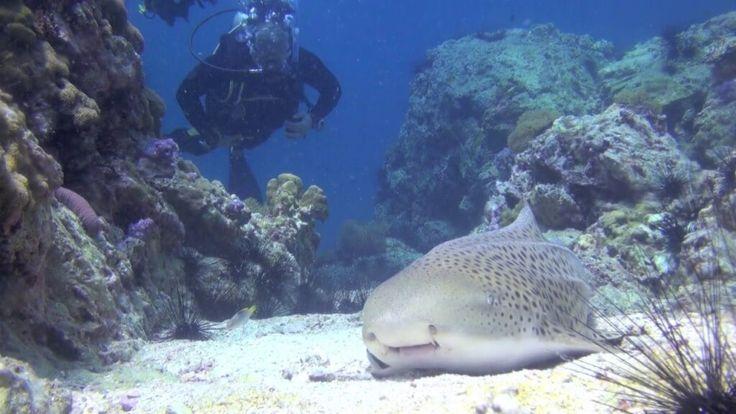 Shark Point Thailand