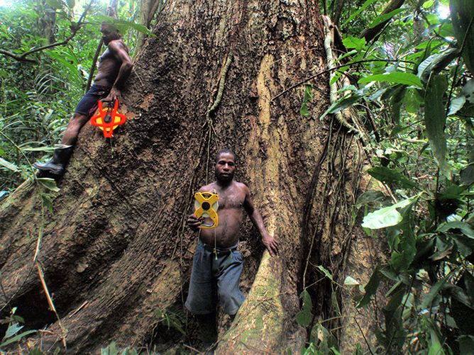 How tree huggers can save forests with science