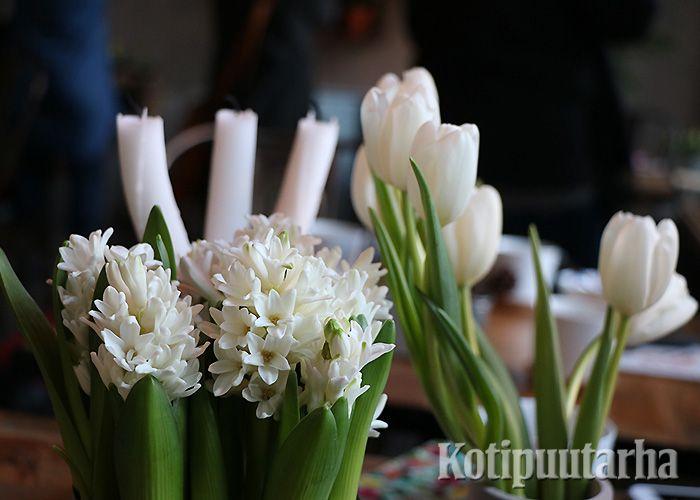 Valkoiset hyasintit, valkoiset leikkotulppaanit ja valkoiset kynttilät - muuta ei tarvita!