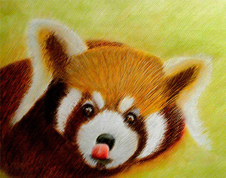 Ilustración Oso panda rojo, técnica pastel seco.